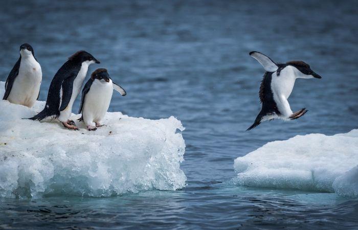 25 апреля всемирный день пингвинов
