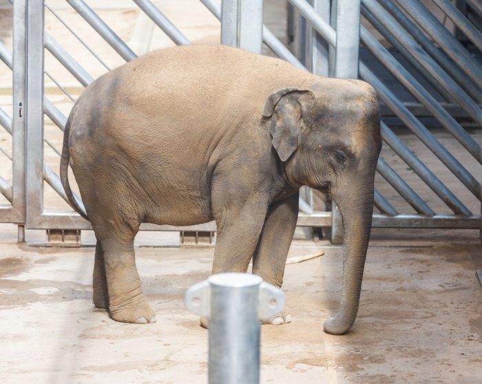 день защиты слонов в зоопарке