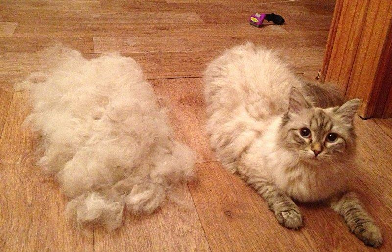 Как котенка сделать шерсть