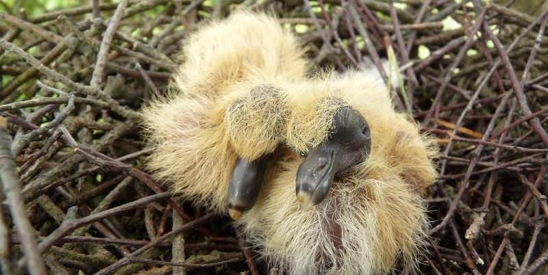фото маленьких голубей