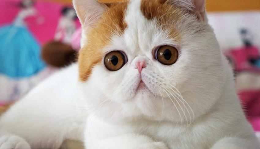 кот снупи