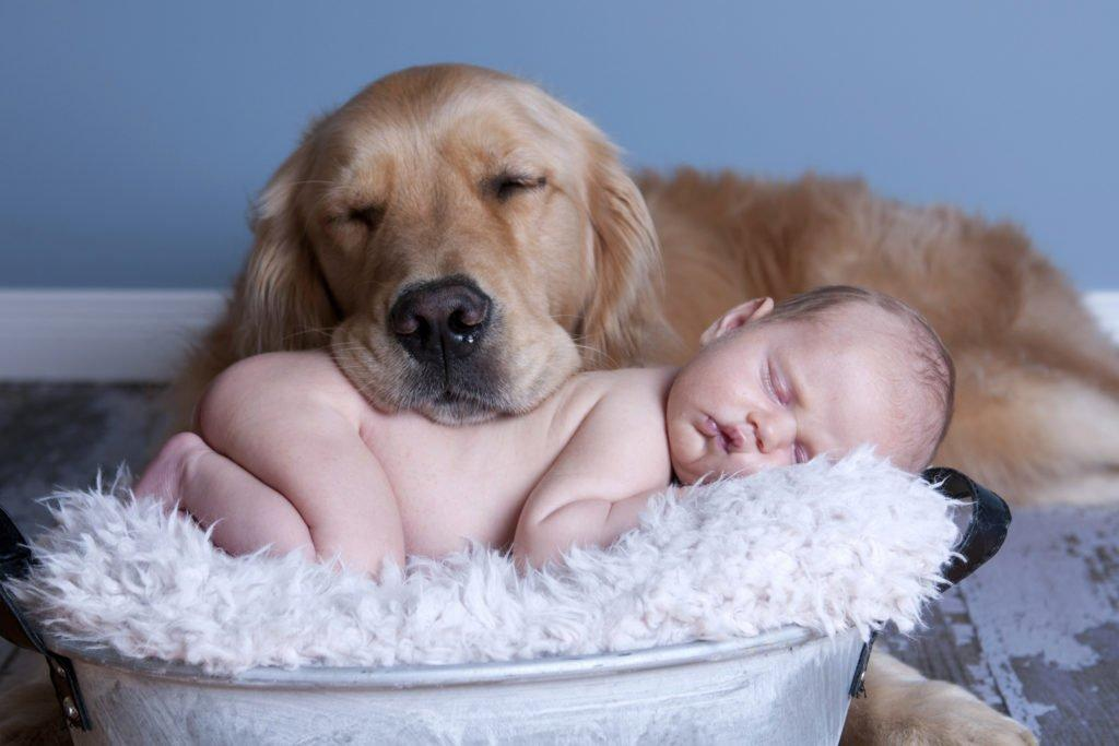 Самые добрые собаки: фото, породы, характер, особенности поведения
