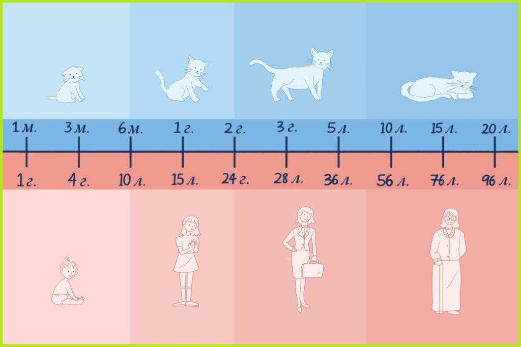 Возраст кошки: как определить, подсчет, сравнение, особенности