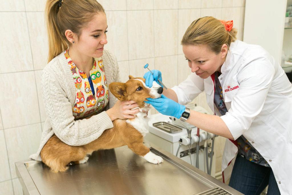 Нужно ли чистить зубы собаке?